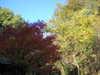 Nature11_026