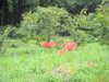 Ashigara20100926_056