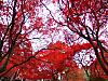 Ooyama_minoge__higashitahara_029
