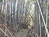 Kinugasa_anjin120209_016