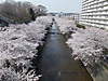 Saura2012ondagawa_001