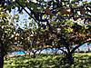 Ondagawa2012summer_15